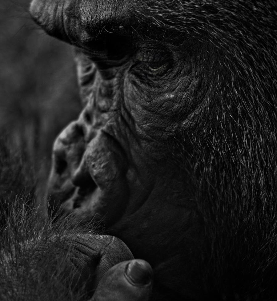 Deep Thinker by Blind-EyePhotography