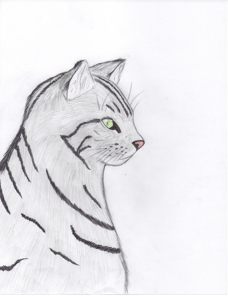 First Attempt At Drawing A Realistic Cat! by Seeking ...