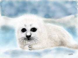 Harp Seal Pup by digitalchet