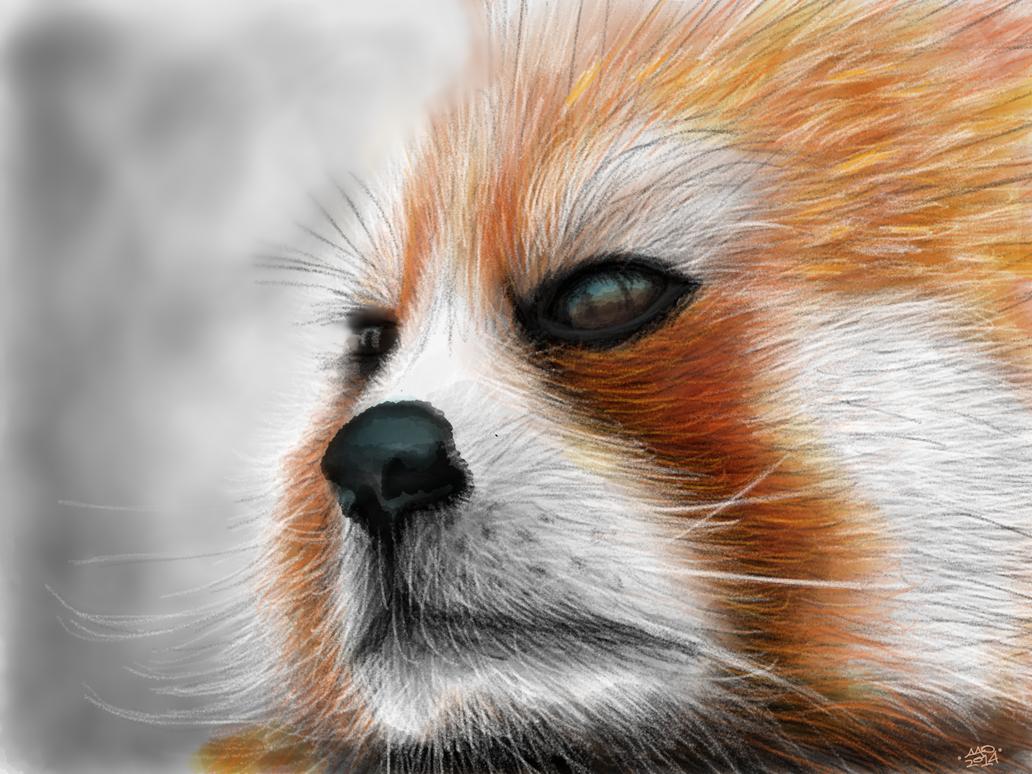 Red Panda by digitalchet