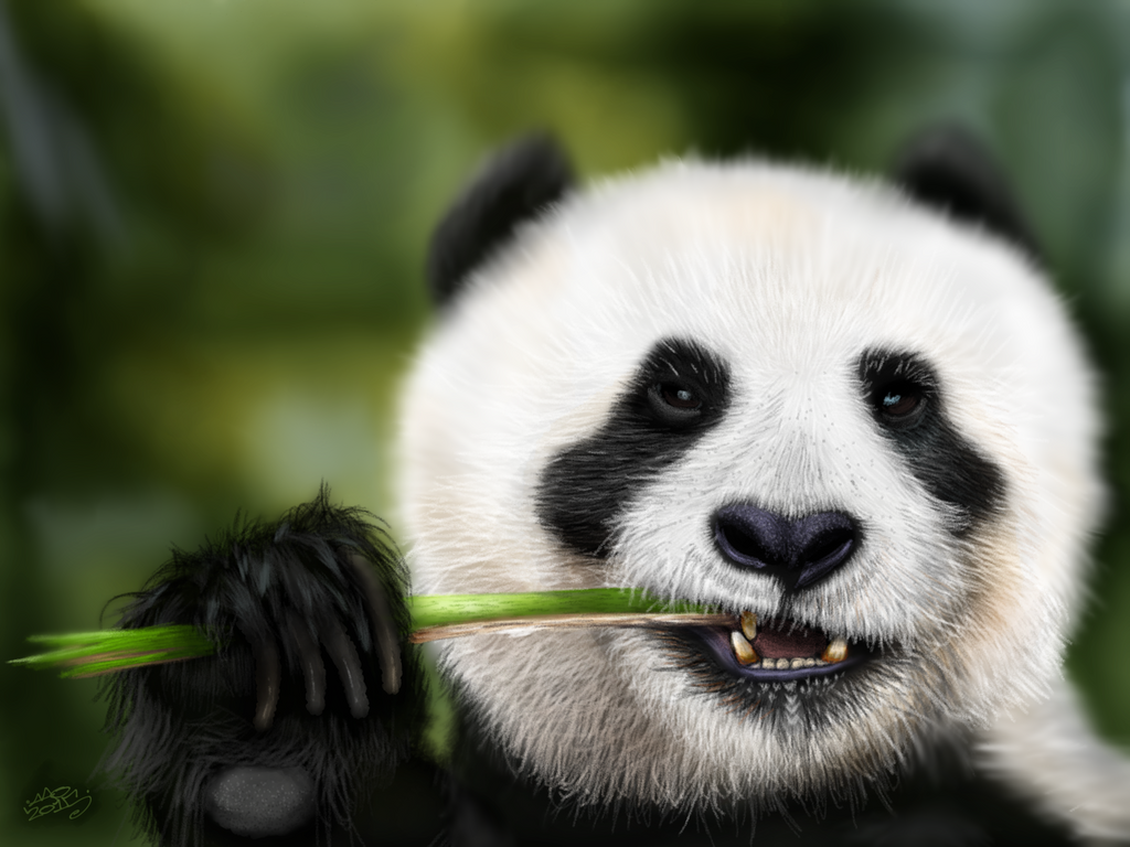 Munching Panda by digitalchet
