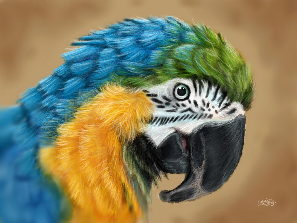 Macaw by digitalchet