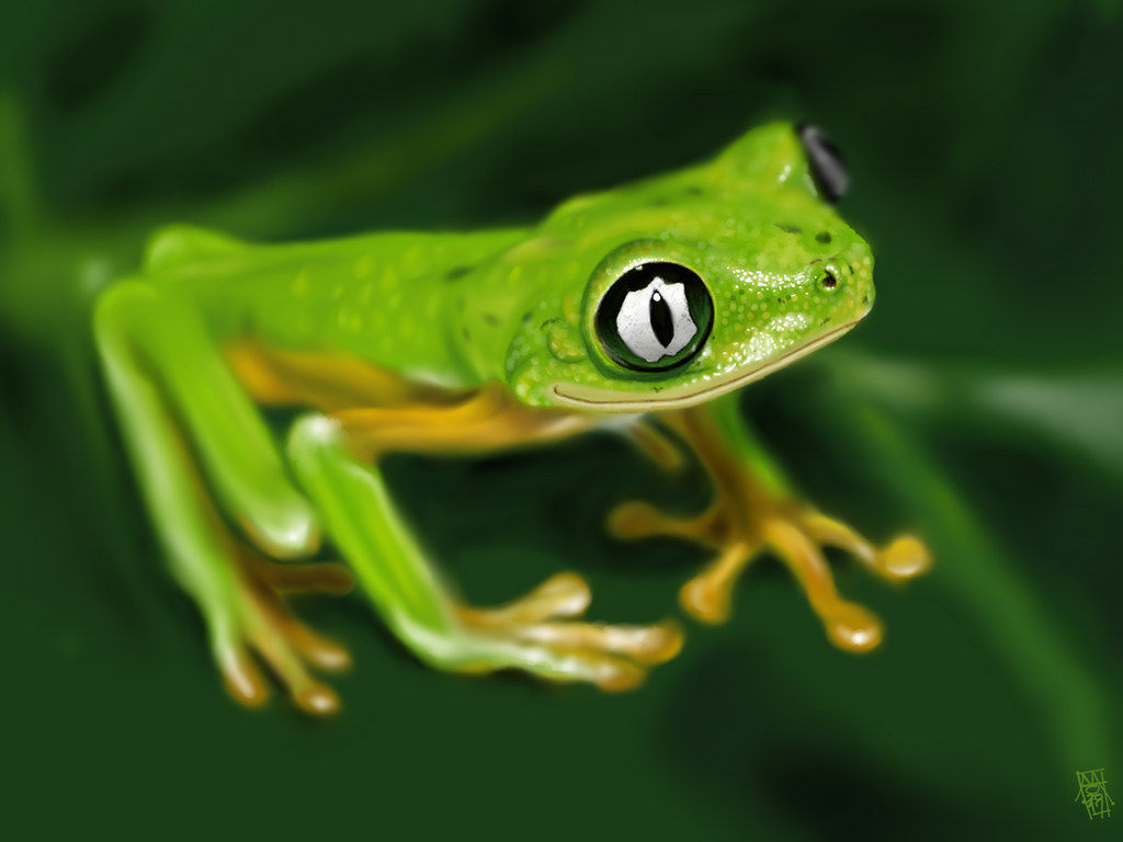 Lemur Leaf Frog (Hylomantis lemur) by digitalchet