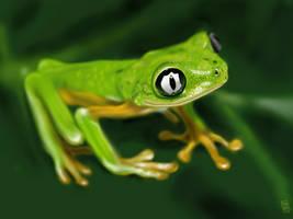 Lemur Leaf Frog (Hylomantis lemur) by digitalchet