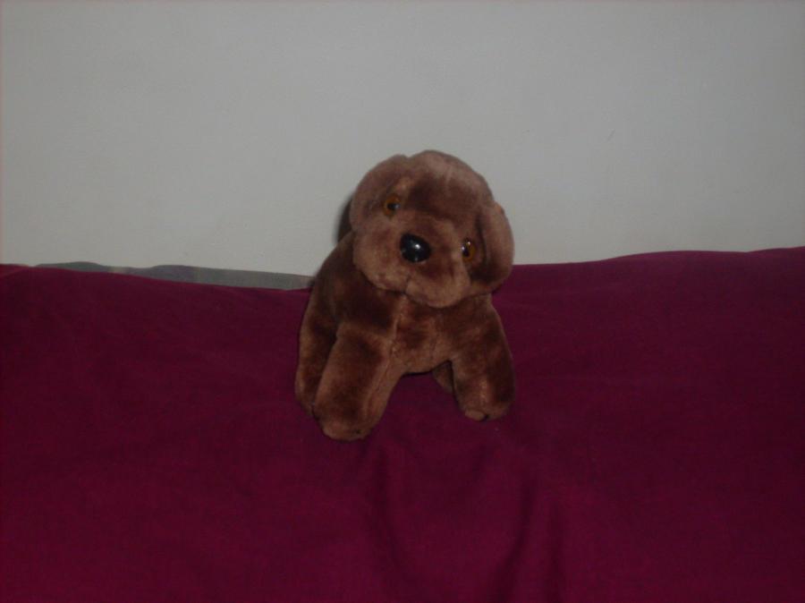 Puppy by Ledin-Wind