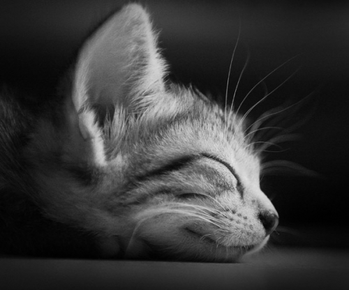 Cat sleeps by ArthurHaze