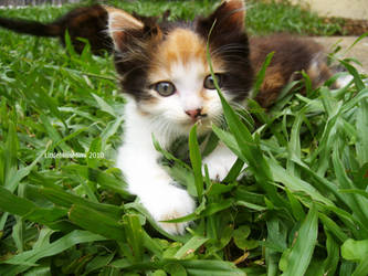 In the Grass.. by MimiMarieT