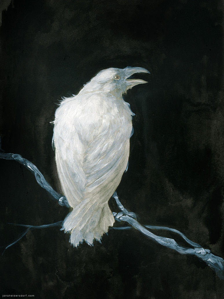 White Raven by Checanty