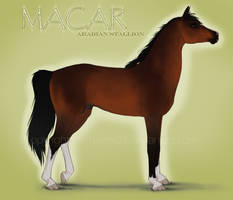 Macar Reference by Hathien603