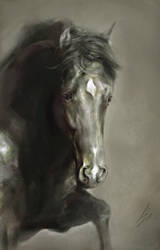 Random Horse by howlinghorse
