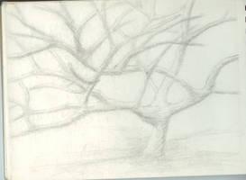 Costa Rican Tree by MyrddinDerwydd