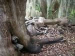 Waterworn tree 2-Skidaway Island