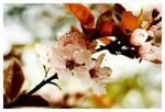 Spring XI