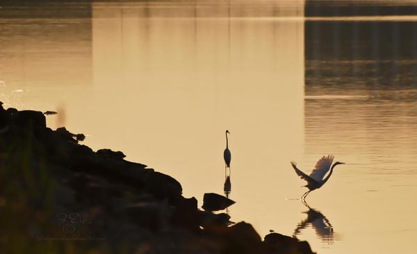 on golden pond by jetsetaphrodite