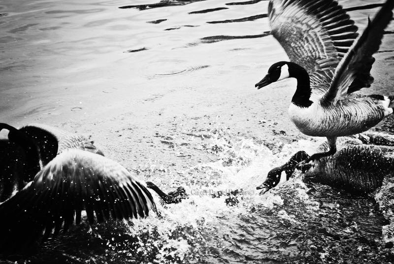goose corprate by jetsetaphrodite