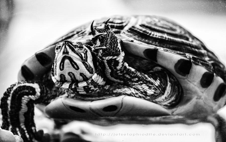 This is Sheldon in black and white by jetsetaphrodite