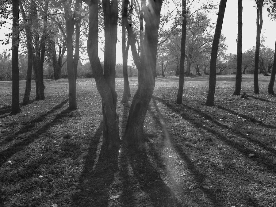 the Pleidean grove by jetsetaphrodite