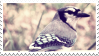 blue jay stamp by forestveins