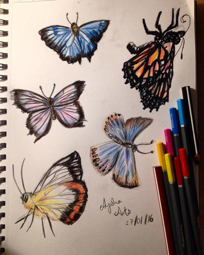 Butterfly Art Prints & Posters | King & McGaw
