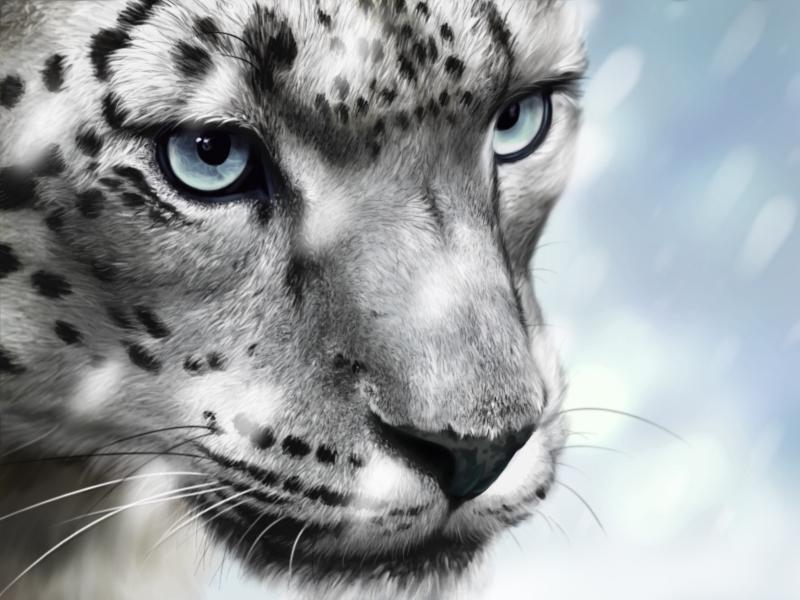Snow Leopard - Snow ver. by lapis-lazuri