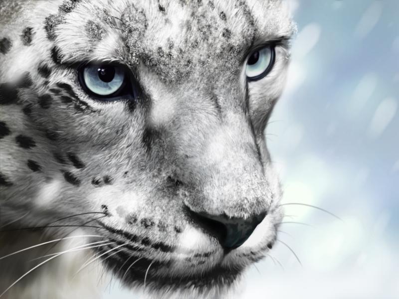 Snow Leopard - Moar Snow ver. by lapis-lazuri