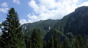 Mountain woods