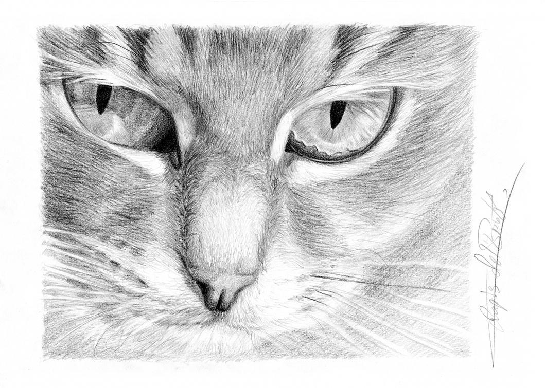 Cat's face by lapis-lazuri