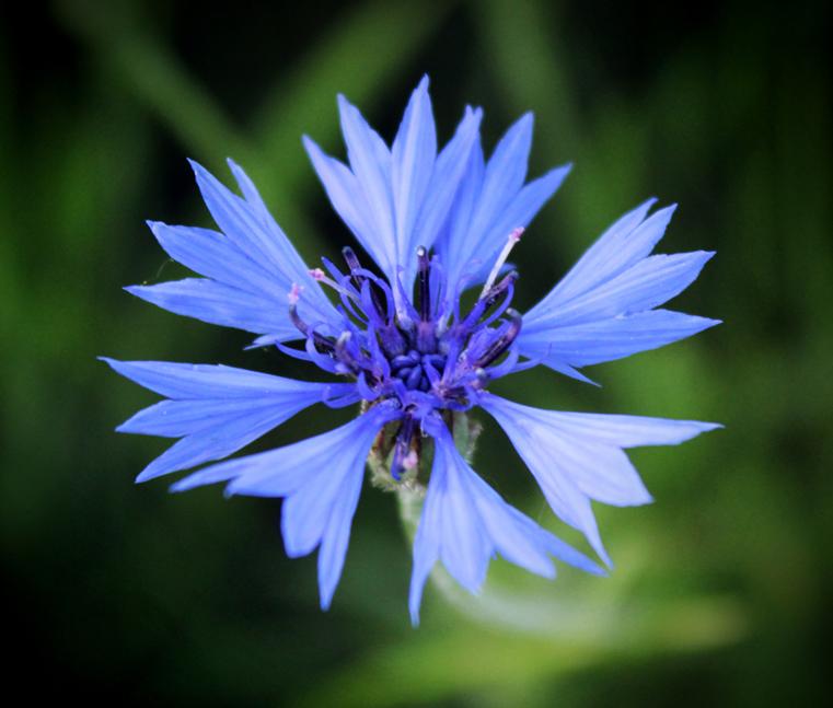 I'm blue by lapis-lazuri
