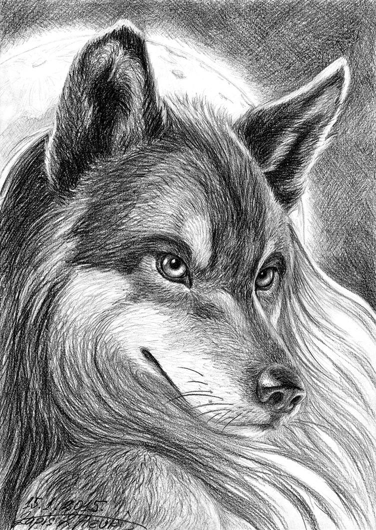 Wolfheart by lapis-lazuri
