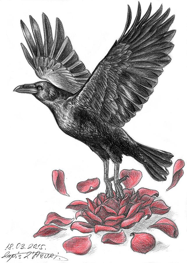 The Raven tattoo by lapis-lazuri