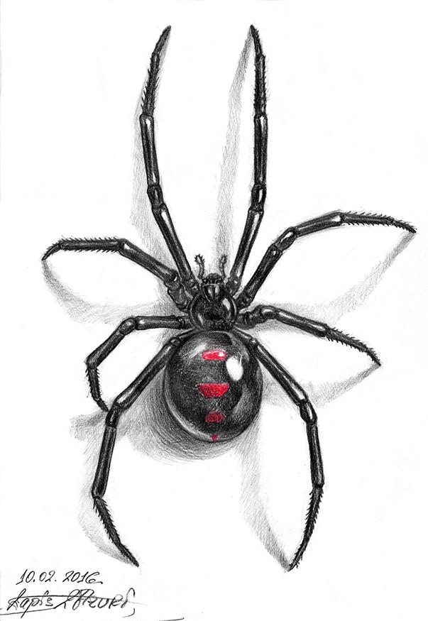 Black widow spider tattoo designs pictures to pin on for Black widow spider tattoo