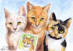The Feline Siblings