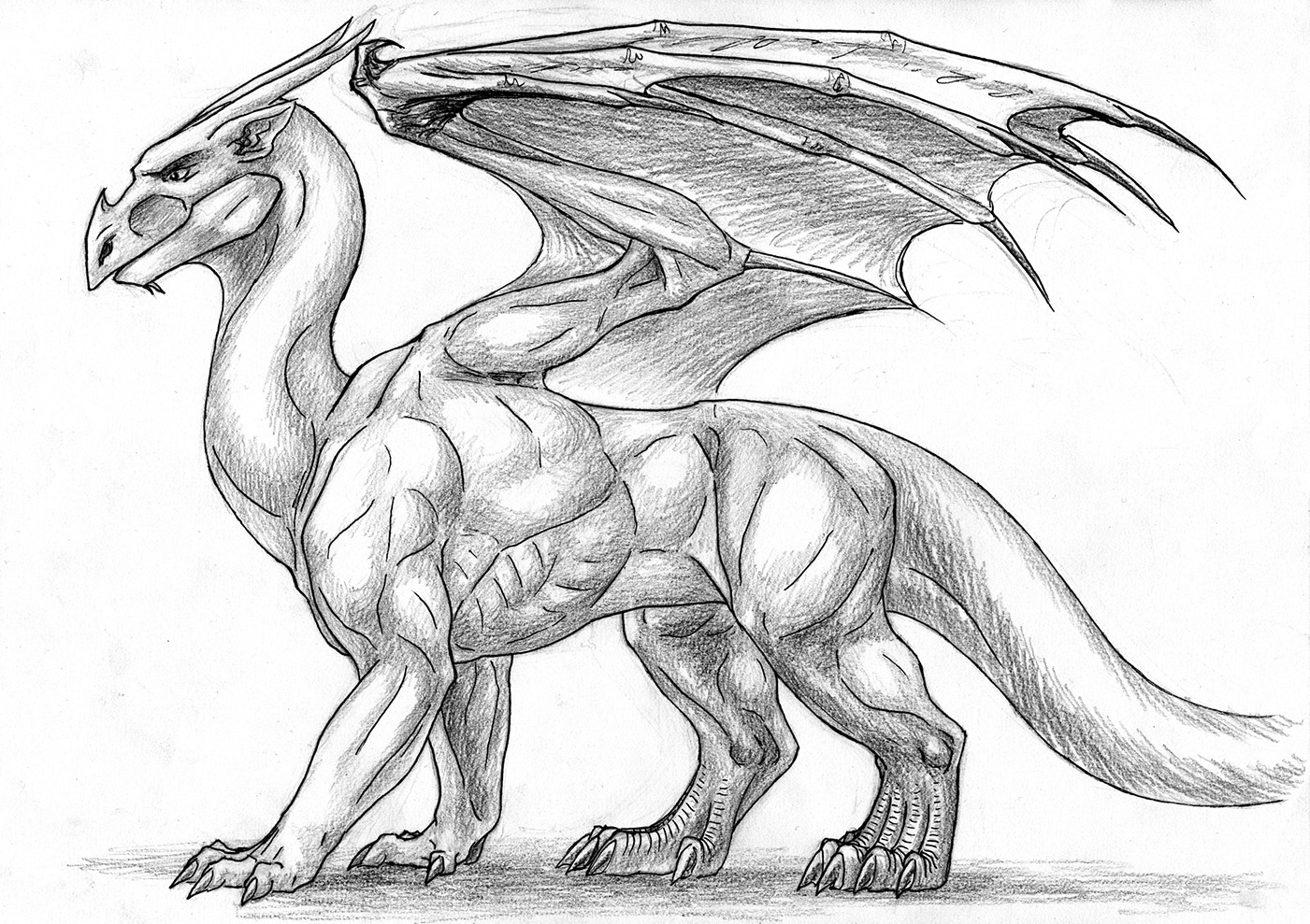 Dragon Anatomy - Surface