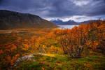 Golden woods of autumn 2