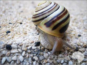 Snail 1 by Melon-Mouse