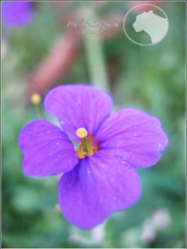 Purple Floret