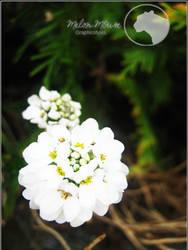 Floret 2