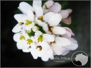 Floret 3