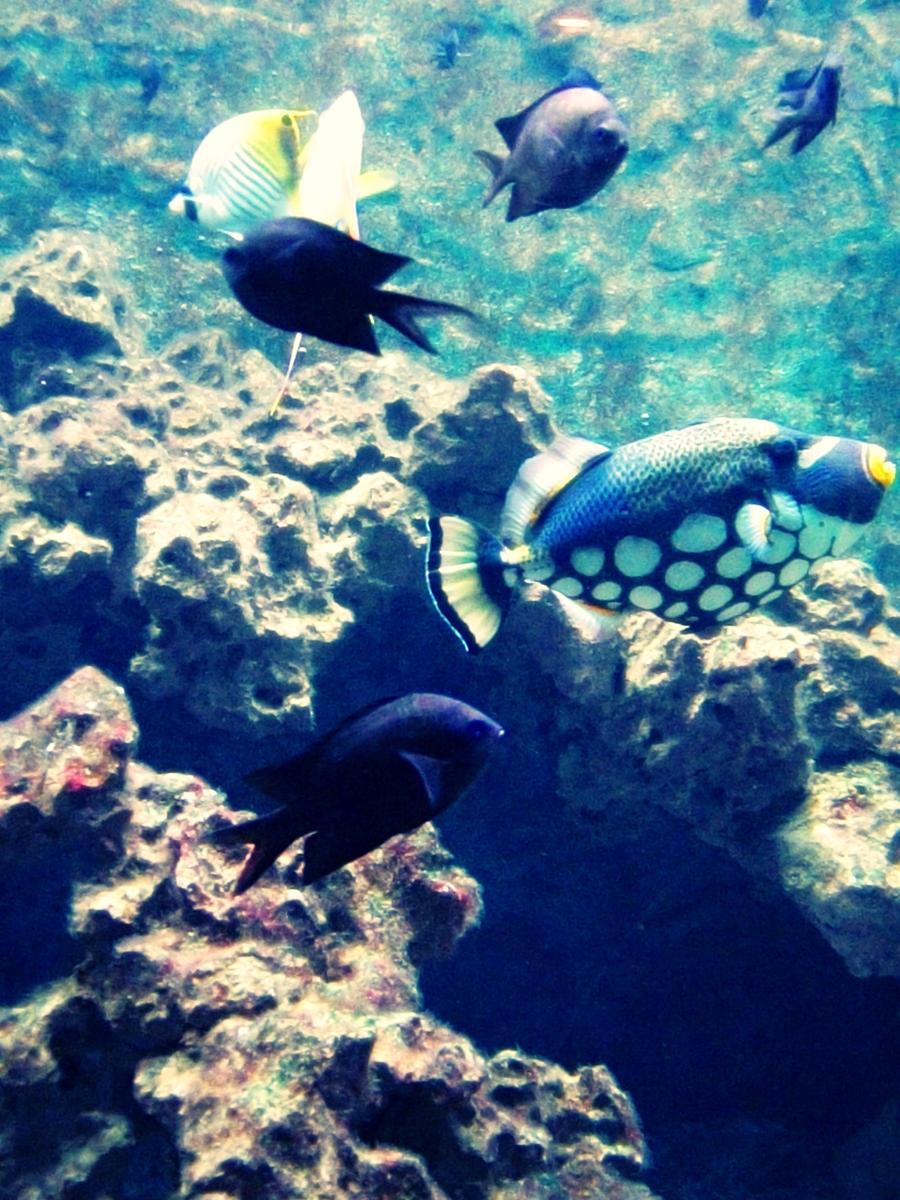 Find the clown fish by mistofstars on deviantart for Buy clown fish