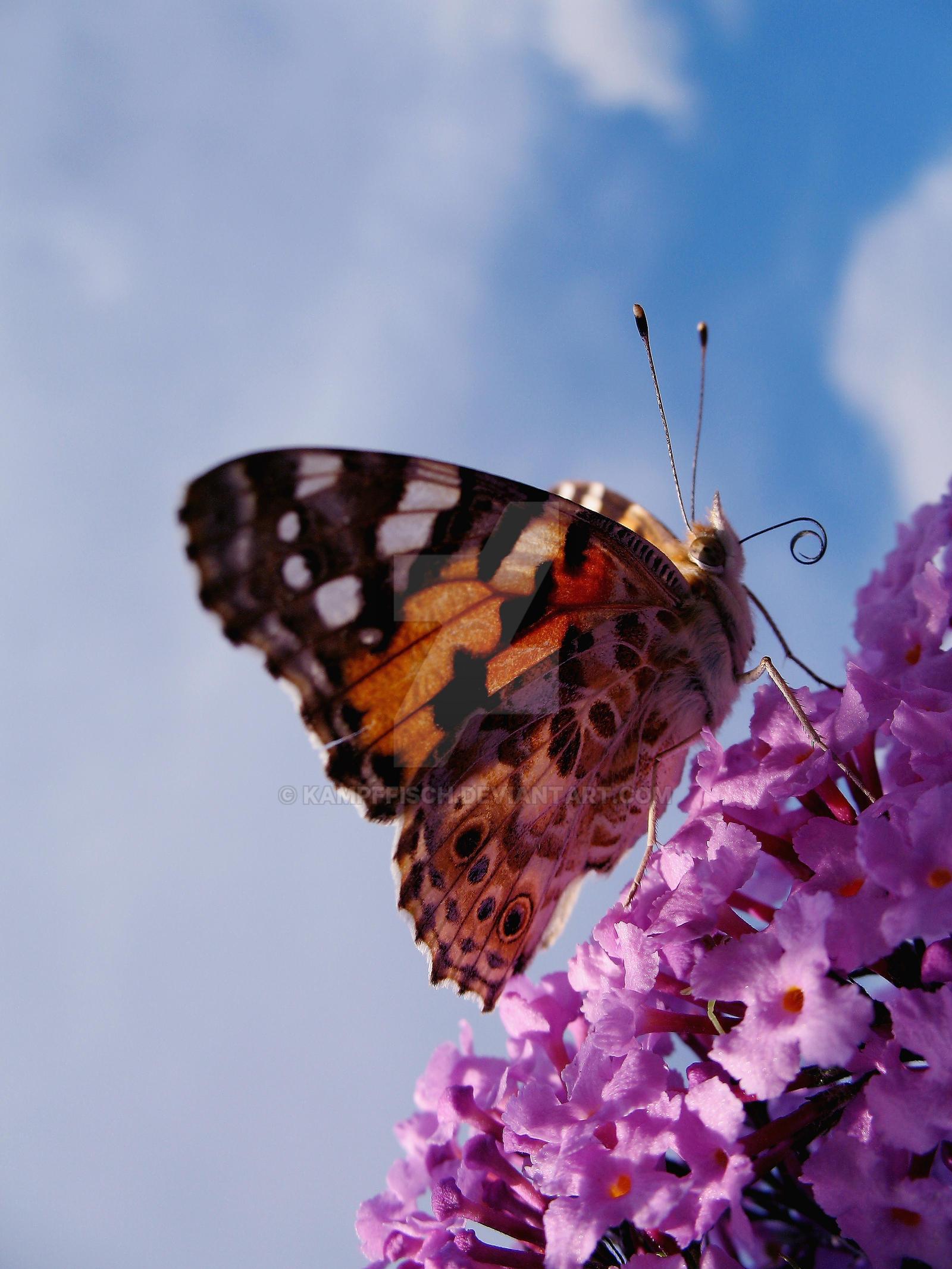 Butterfly by kampffisch on deviantart for Kampffisch shop