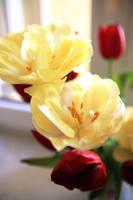 Yellow Flowers. by KreativesVakuum