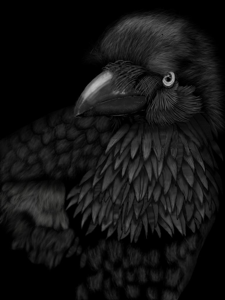 Crow by Matsuemon