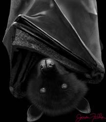 Bat by Matsuemon