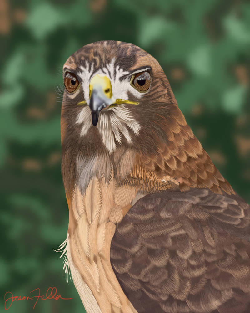 Dea the Red-Tail Hawk by Matsuemon