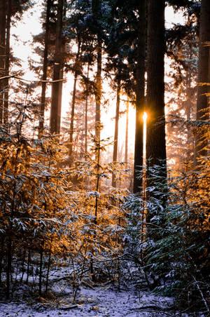 ForestII by xfebex