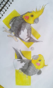 cockatiels - LaininCreations