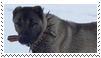 kangal dog stamp by goredoq