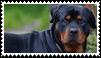 rottweiler dog stamp by goredoq