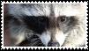 raccoon stamp by goredoq