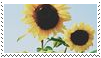 sunflowers stamp by goredoq